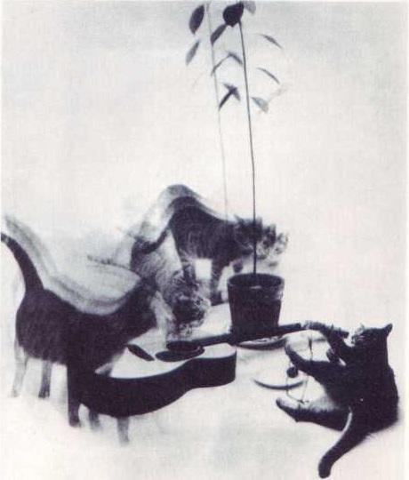 Дейвид Этти Кошка, гитара и авокадо, 1965
