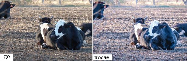 zoo-preset-1