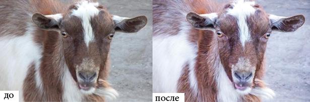 zoo-preset-3