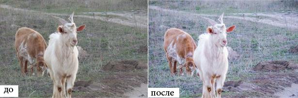 zoo-preset-4