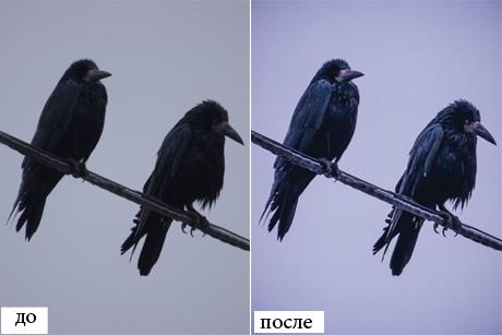 zoo-preset-6
