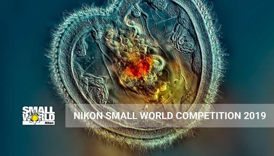 https://nataliabazilenco.com/foto/mira/uploads/2019/02/NIKON-SMALL-WORLD-COMPETITION-2019.jpg