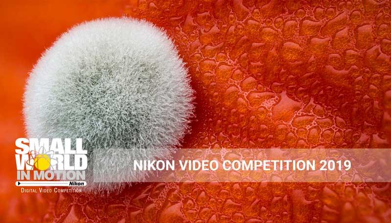 https://nataliabazilenco.com/foto/mira/uploads/2019/02/NIKON-VIDEO-COMPETITION-2019.jpg