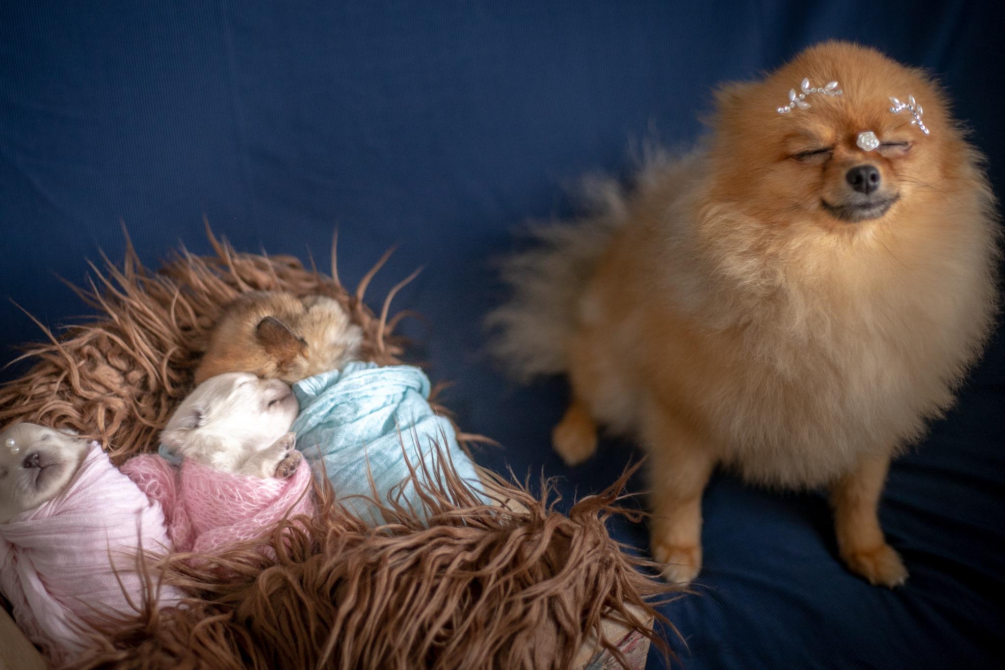 Самые очаровательные щенки